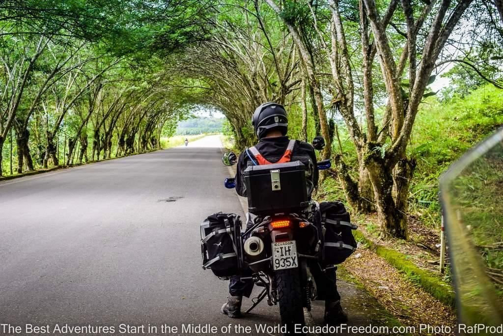 Adventure Motorcycle Tour of Ecuador - Motorcyclist under a tunnel of trees