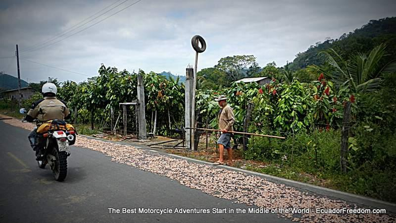cacao farmer drying cacao alongside road in Ecuador with motorcycle