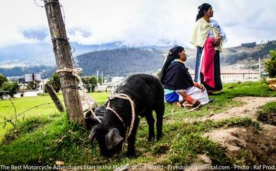 otavalo animal market two indigenous women and a pig