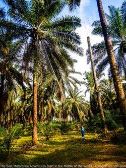 palm groves near quevedo ecuador motorcycle dirt bike adventure tour