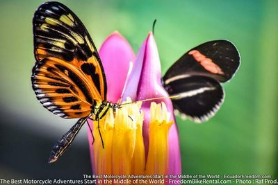 mindo butterfly garden motorcycle adventure tour