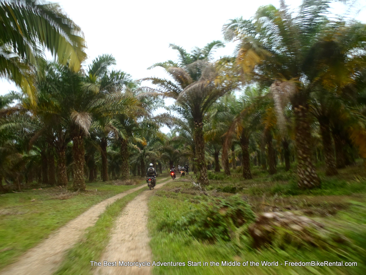 motorcycling_through_palm_groves_near_quevedo