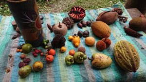 fruit_farm