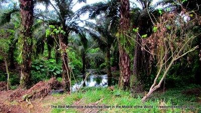 palm_grove_near_golondrina