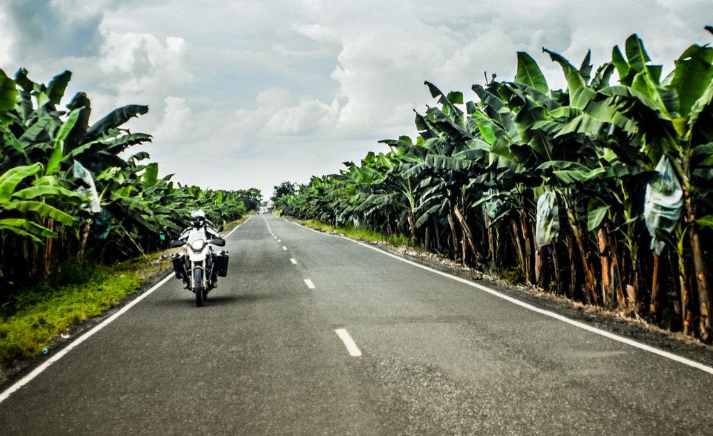 riding_in_banana_fields